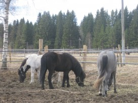 Hevosenlanta